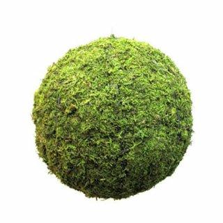 Geometrische formen tropical for Buchsbaum pferdefigur