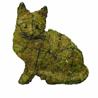Katzen tropical for Buchsbaum pferdefigur