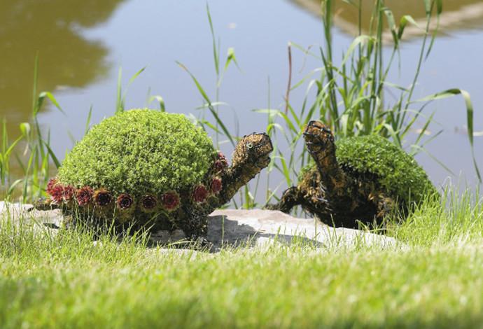 Schildkröten mit Moos und bepflanzt